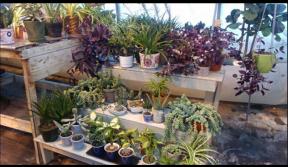 Magasiner des plantes pour les Fêtes