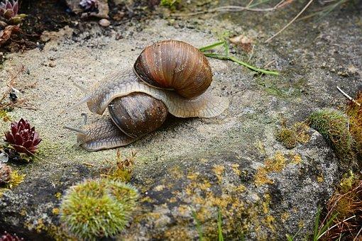 Les deux escargots