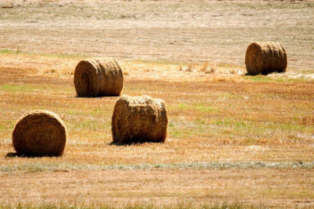 Le manque de pluie affecte la plupart des productions agricoles