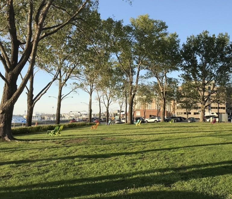 Travaux arboricoles au centre-ville