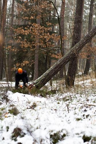 Améliorer le régime forestier pour une meilleure contribution à la relance économique