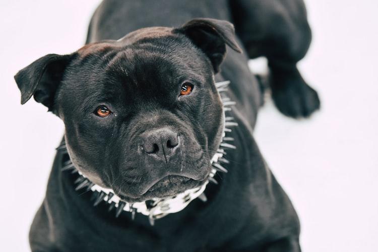 Saint-Éloi revoit sa réglementation sur les animaux