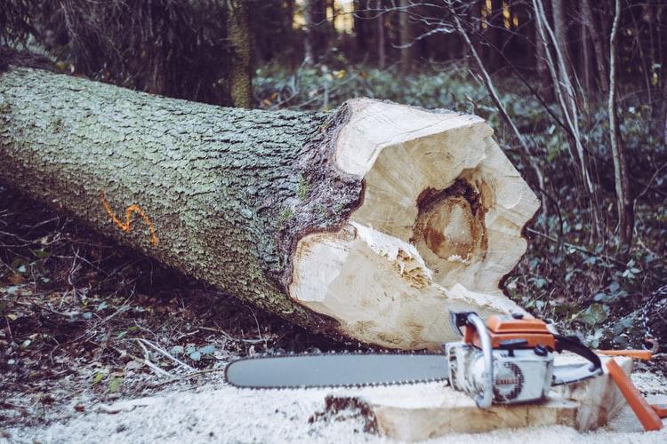 Enquête publique réclamée sur la gestion du ministère des forêts