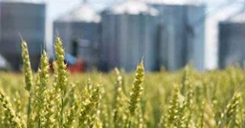 Bilan agricole : temps clément; rendements attendus