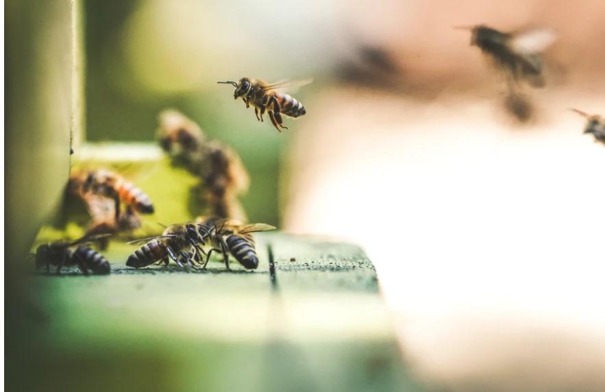 La députée Michaud demande à Ottawa de bannir les pesticides «tueurs d'abeilles»