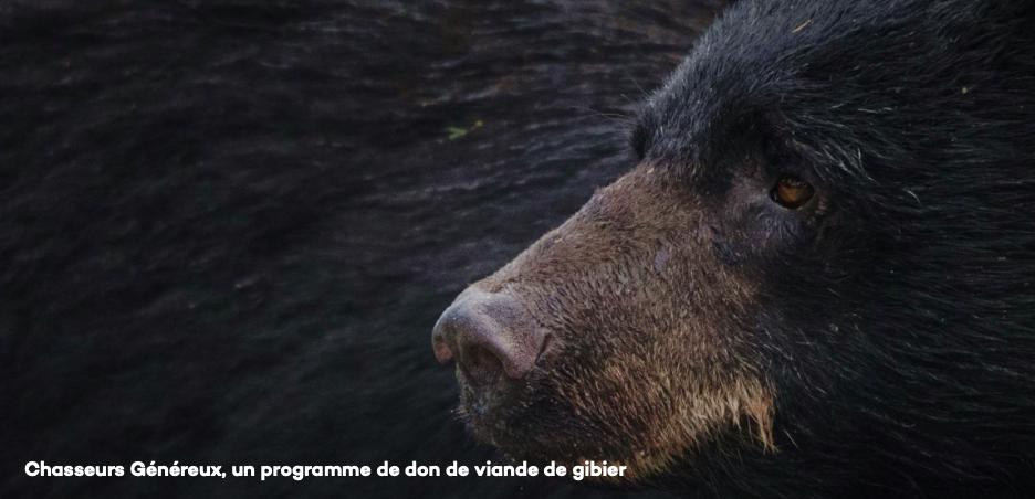 La chasse de l'ours noir attire plus  d'amateurs et initie aussi la relève