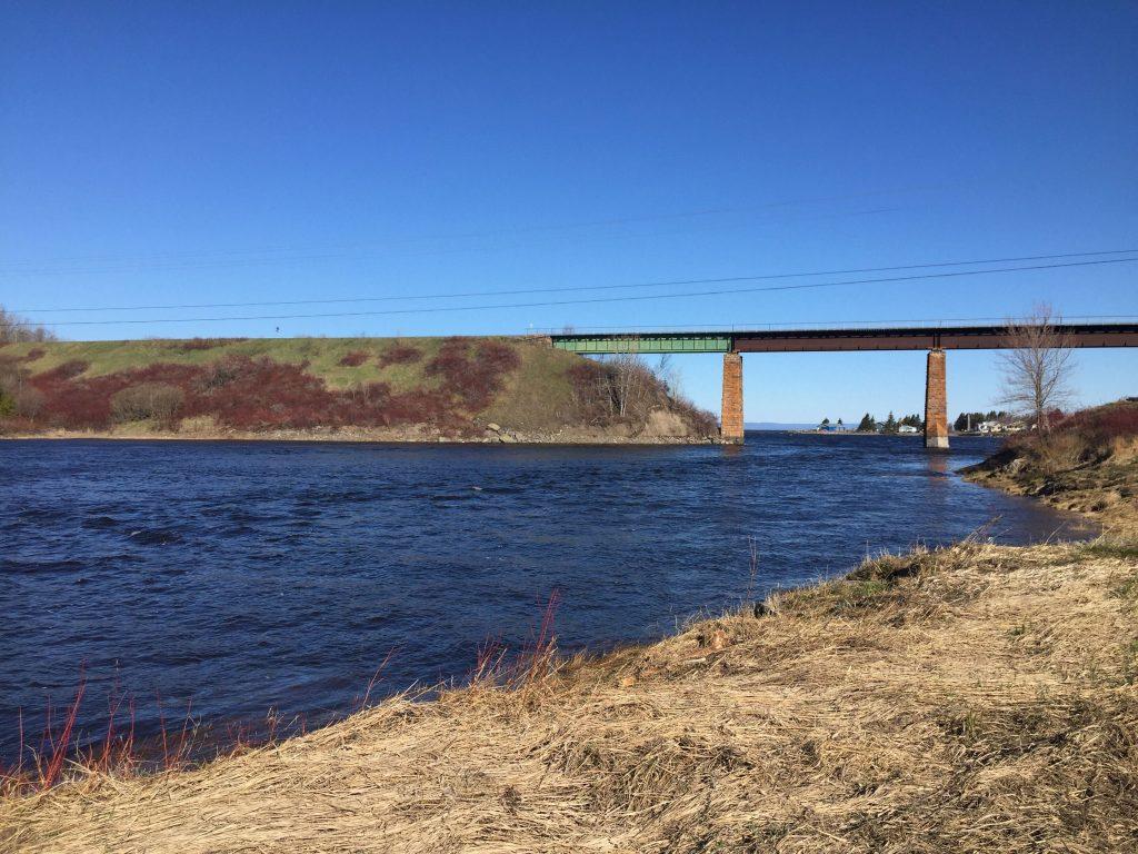 L'éperlan arc-en-ciel de retour dans la rivière Trois-Pistoles?