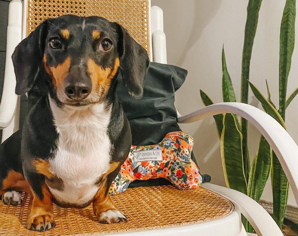 Finfido... une nouvelle entreprise qui a du chien !